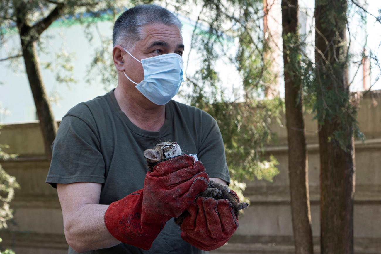 Tenyésztői siker: különleges macskafajta született a Debreceni Állatkertben