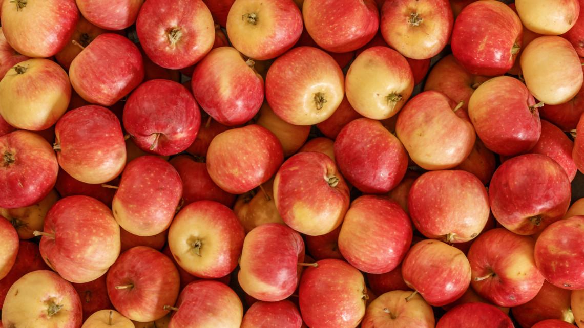 Hány kalória egy alma? Mutatjuk, mennyi az alma kalória..